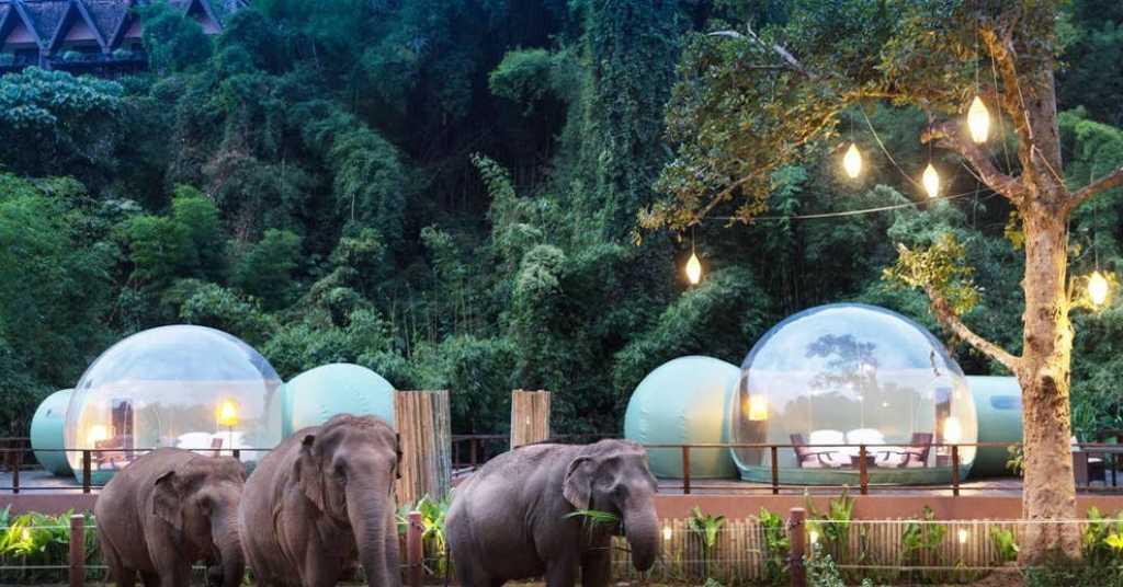 olifanten hotel 2a