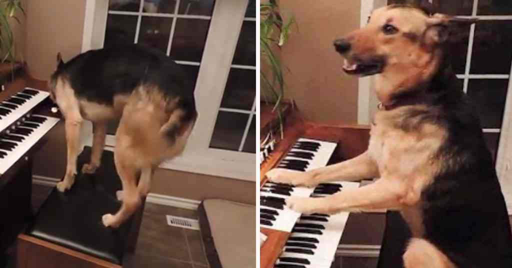 piano spelen hond 6