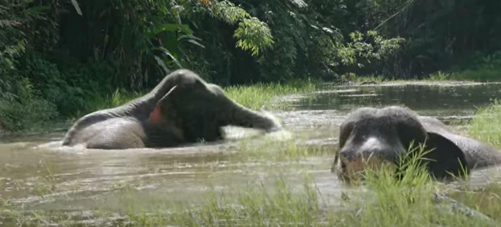 redding van olifanten 4a