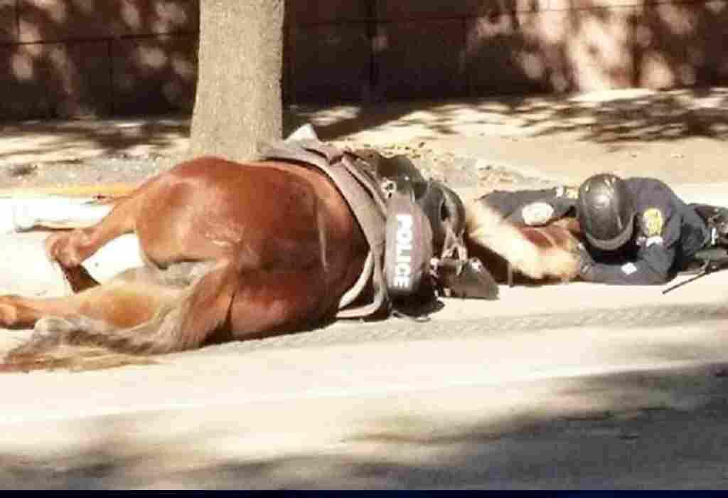 stervend politiepaard 1a