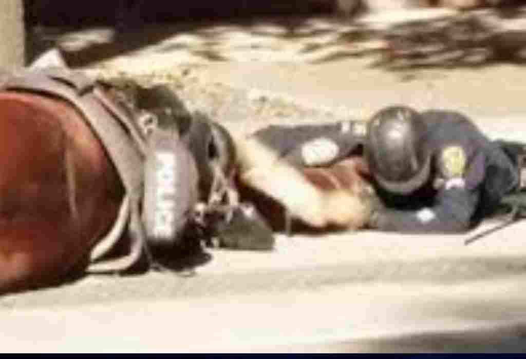 stervend politiepaard 2a