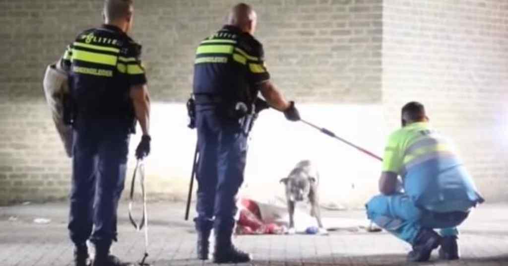 trouwe hond beschermt baasje 3a