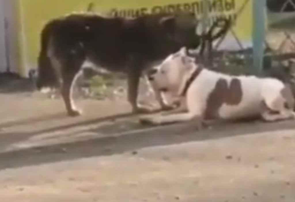 vastgebonden hond 2a