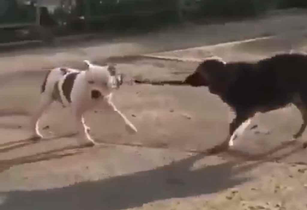 vastgebonden hond 3a