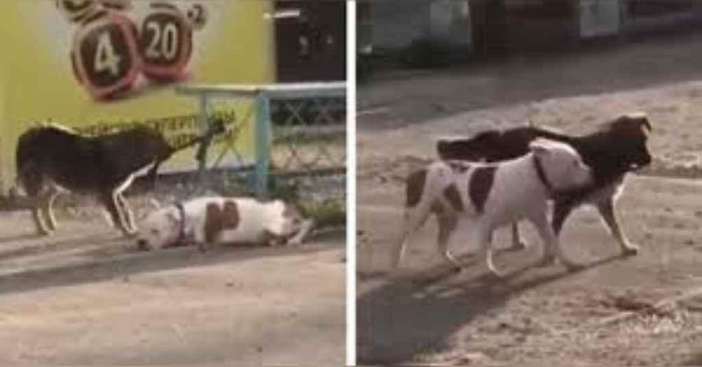 vastgebonden hond 4