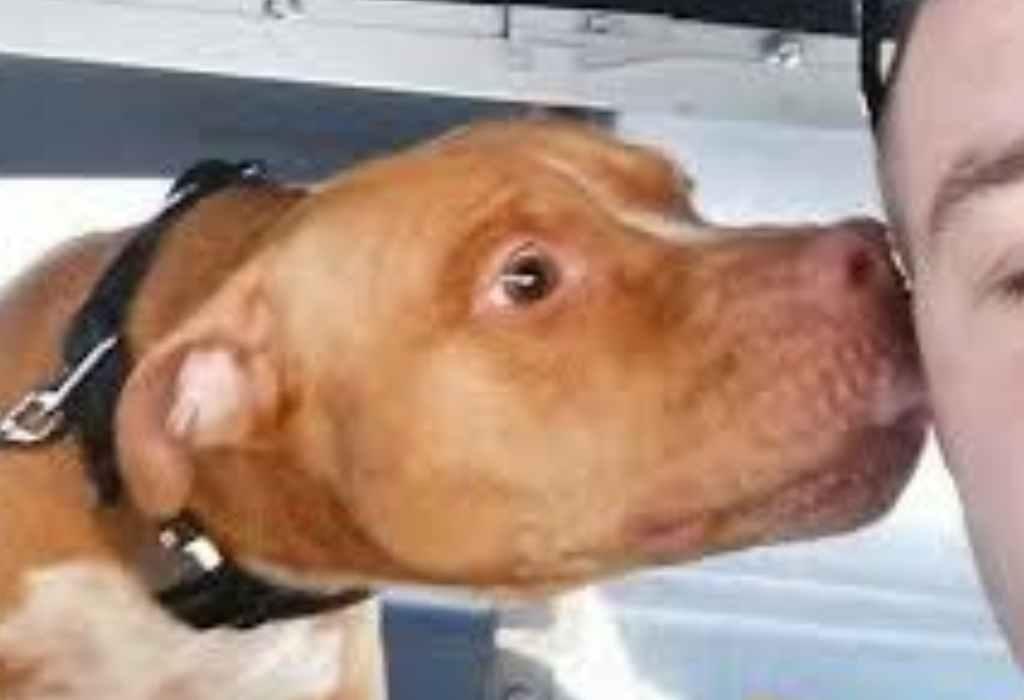 verwaarloosde hond redden 1a