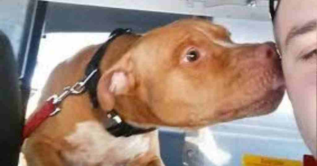 verwaarloosde hond redden 4