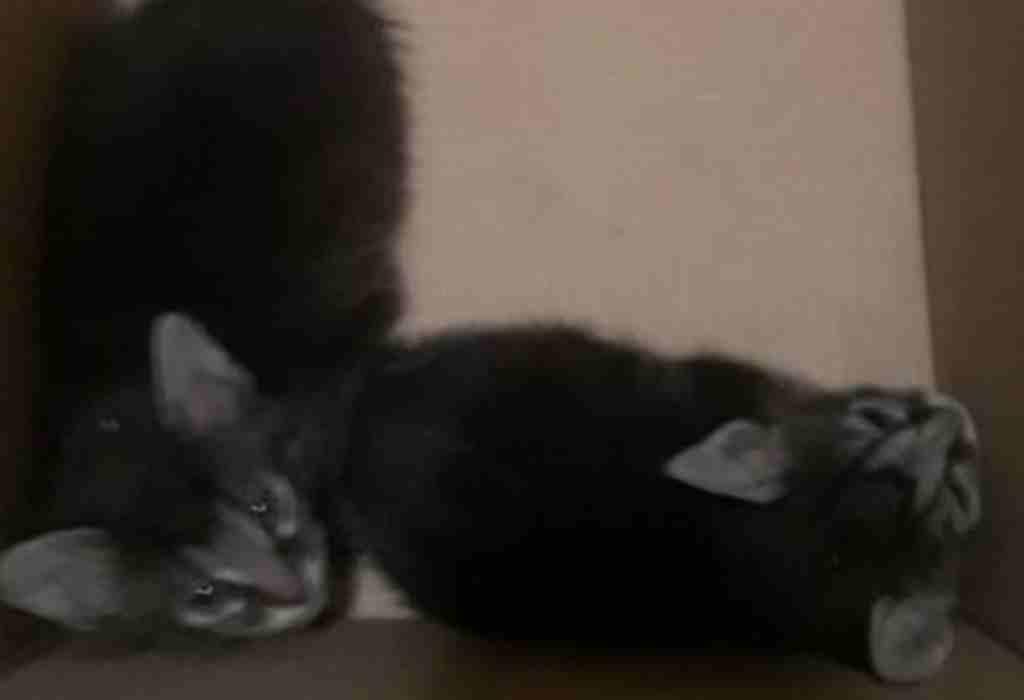 vrouw redt kittens uit muur 3a