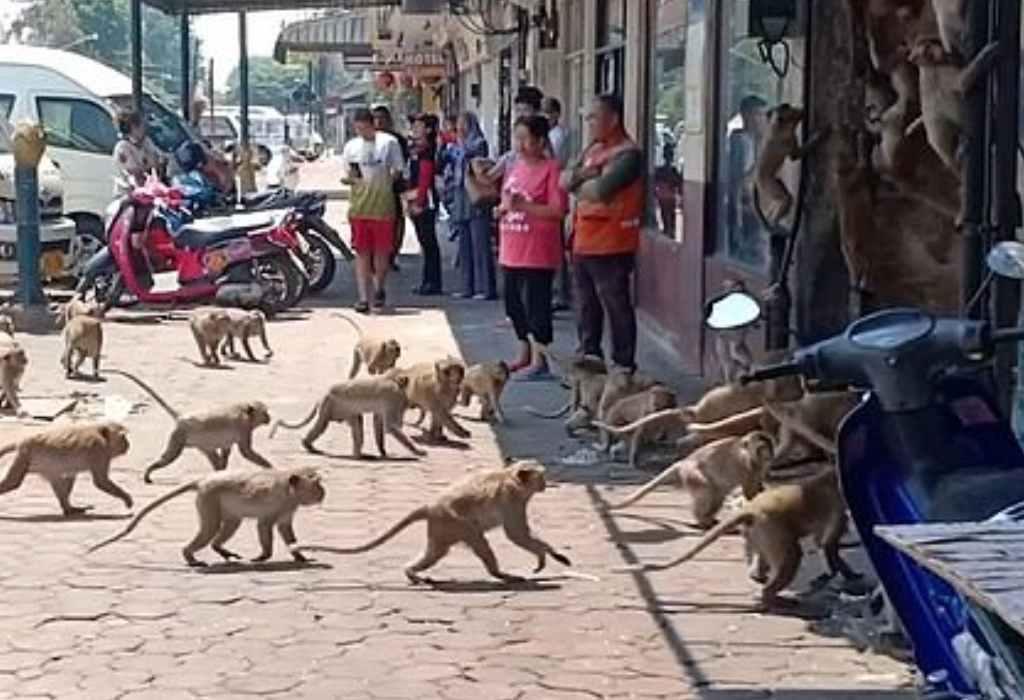 wilde apen in thailand 1a