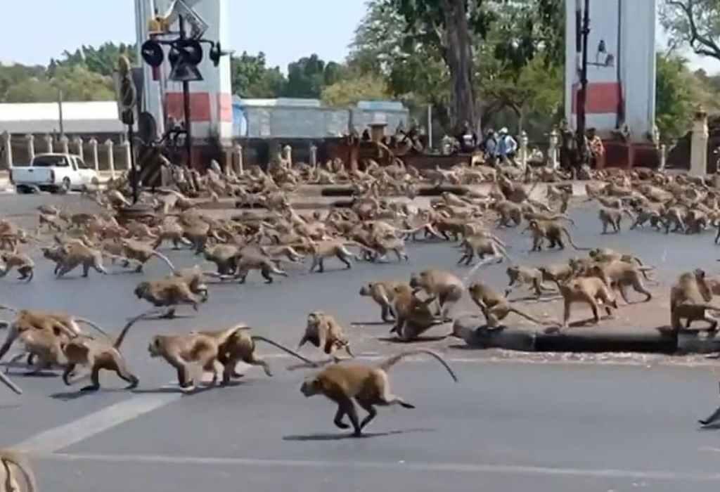 wilde apen in thailand 3a