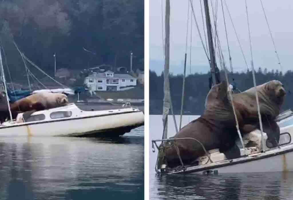 zeeleeuwen op boot 1a