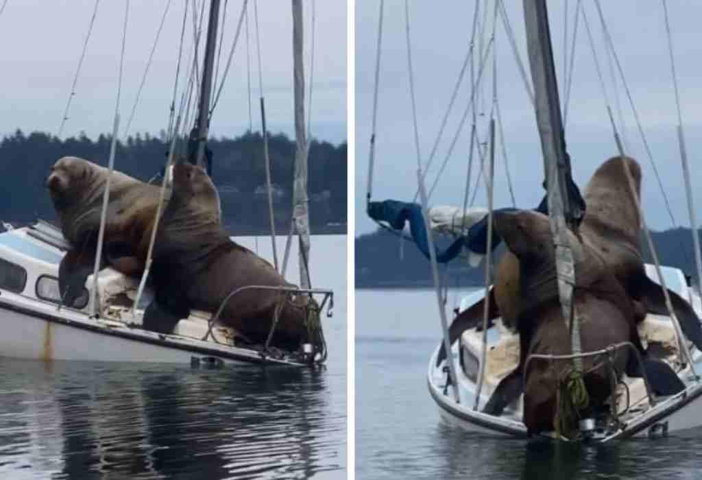 zeeleeuwen op boot 2a