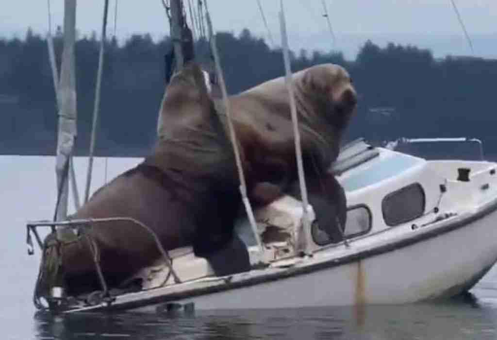 zeeleeuwen op boot 3a