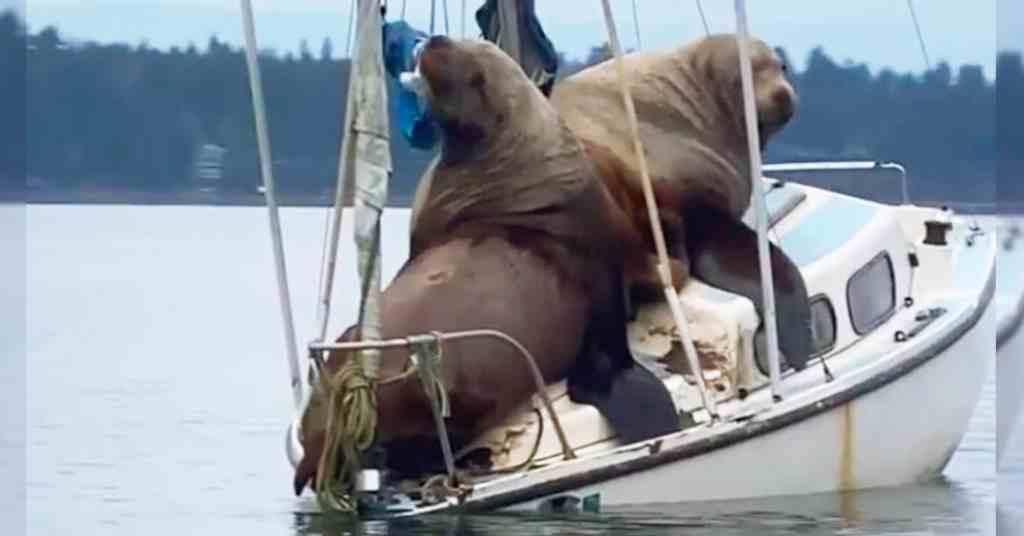 zeeleeuwen op boot 5